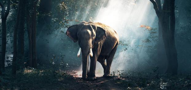 Gebelik süresi en uzun hayvanlar